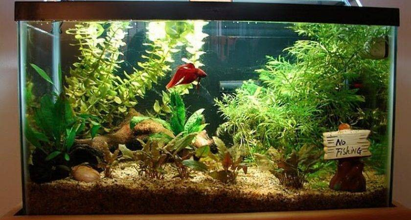 Fish Aquarium Decorating Ideas
