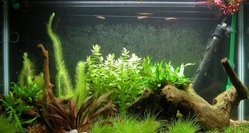 Fish-Tank-Decoration-Ideas.jpg