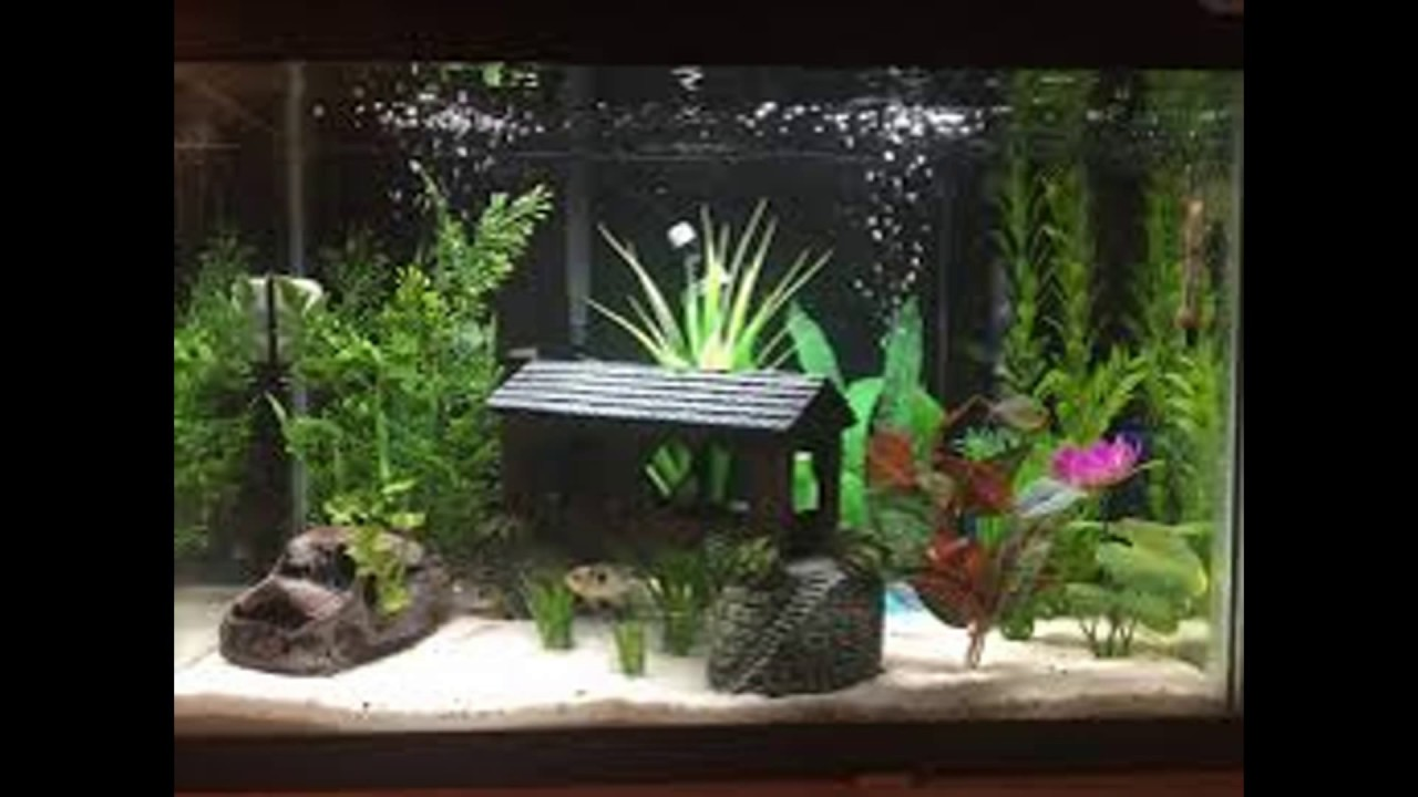Fish Tank Decoration Themes