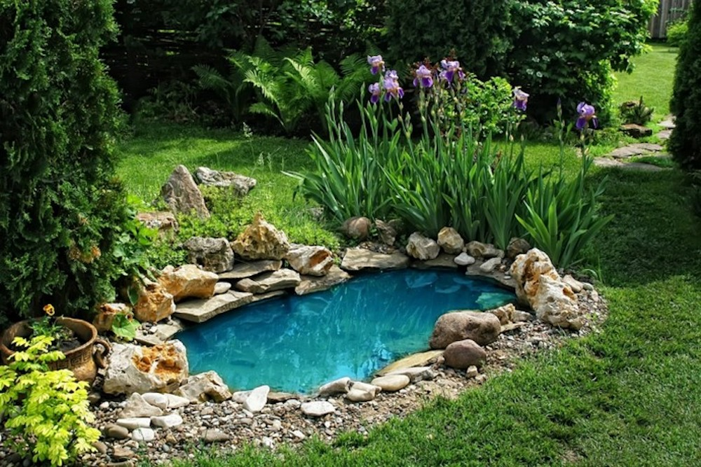 small gardens with pond